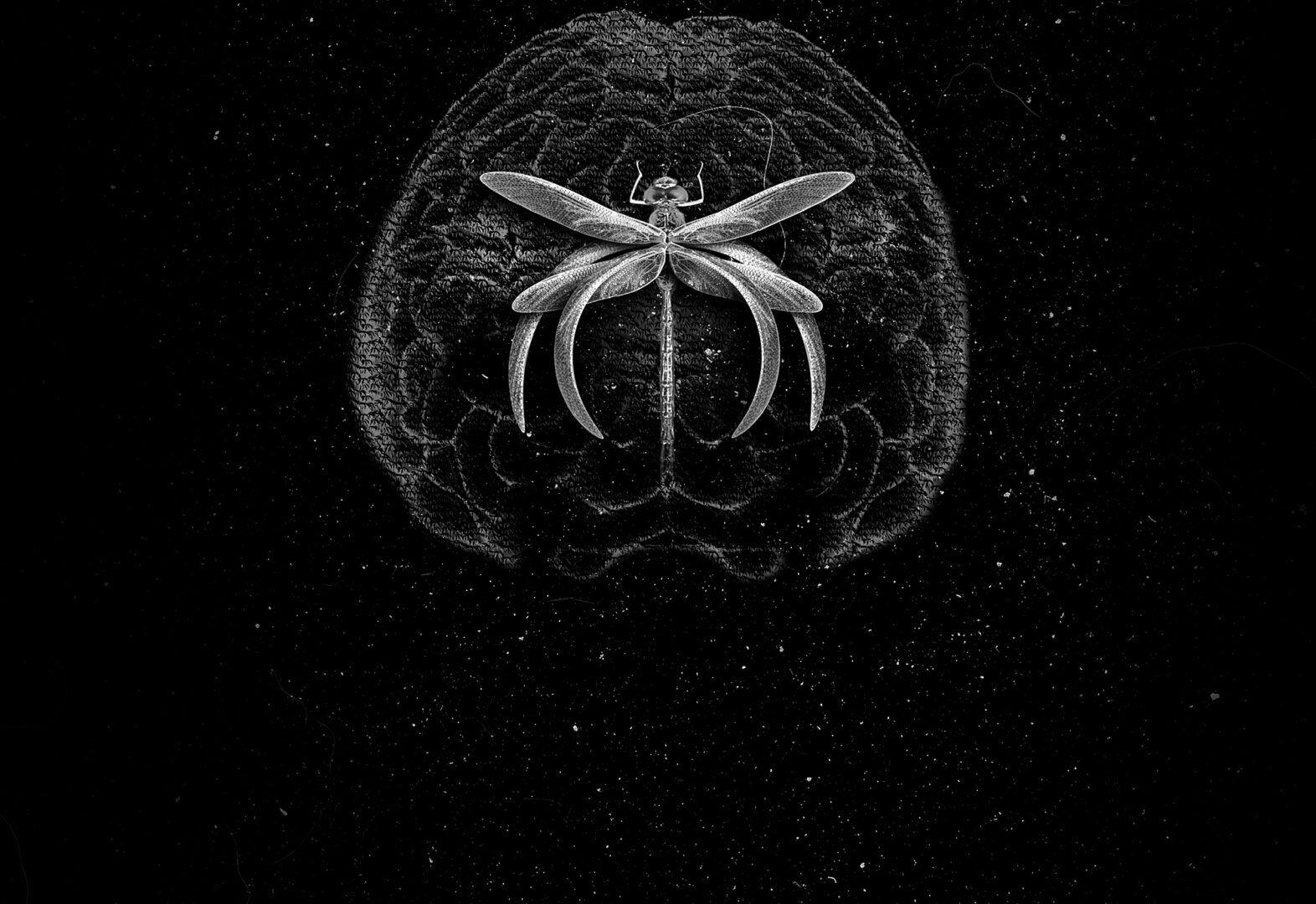Khramer abre el año en Parallel Depth con su EP 'Bodied' | Wololo Sound